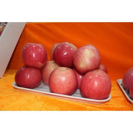 洛川苹果 80mm香甜可口,不打蜡,带皮吃,素以色,香,味俱佳著称