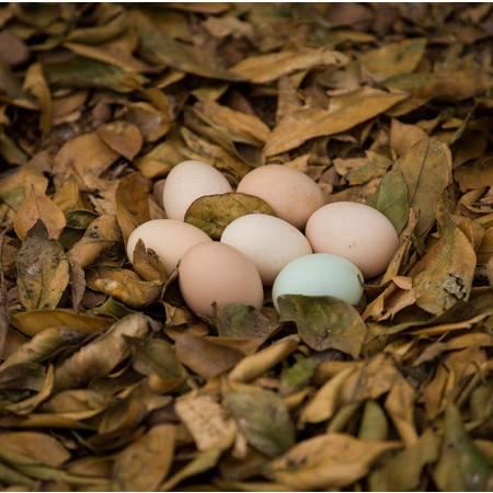 龙游农品 徐家掌柜农家土鸡蛋30枚