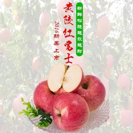 陕西延安黄陵自产自销红富士苹果12粒(80mm) 包退包换(青海,新疆,西藏不包邮哦)
