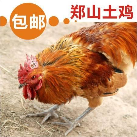 正宗郑山土鸡(公鸡)