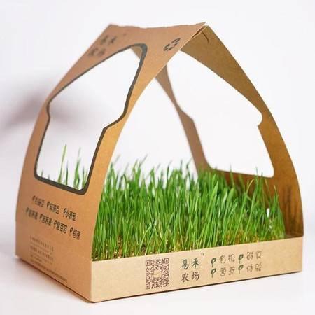 小麦苗 两盒包邮