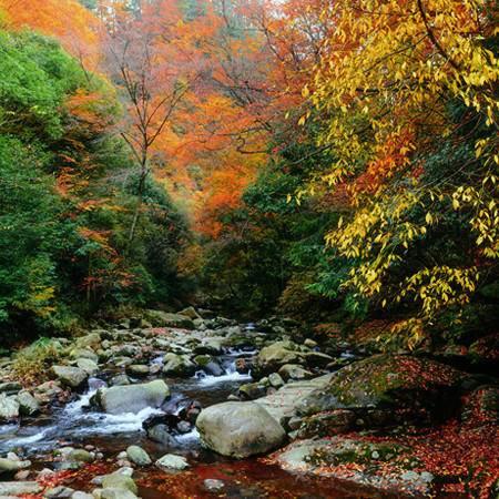 红叶之旅--光雾山大坝景区三日游