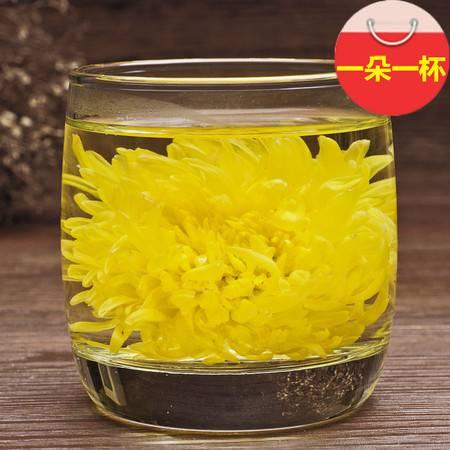 徽谷   金丝黄菊