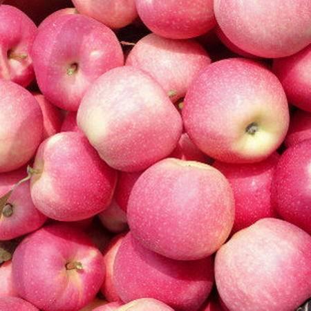 农家自产 陕西礼泉红富士新鲜水果冰糖心富士苹果非烟台10斤礼盒装