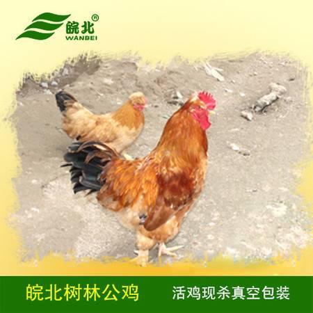 皖北正宗杨树林土公鸡天然农家散养1年老公鸡新鲜现杀活鸡柴草鸡包邮