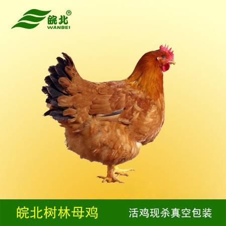 正宗农家散养一年老母鸡粗粮树林土鸡新鲜现杀活1年草鸡笨鸡包邮