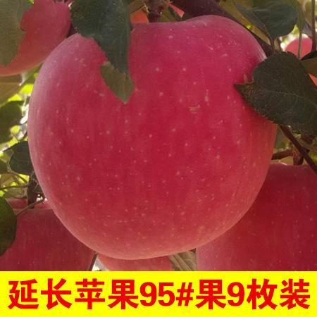 陕西延长红富士苹果95#果9枚装 包退包换 (新疆,青海,西藏,宁夏,海南不包邮哦)