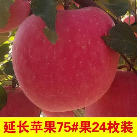 陕西延长红富士苹果75#果24枚装 包退包换 (新疆,青海,西藏,宁夏,海南不包邮哦)